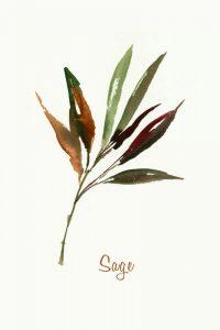 Wild Sage – Mini