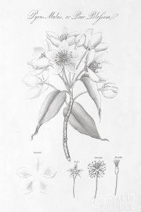 Botany Book VIII