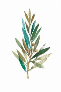 Olive III