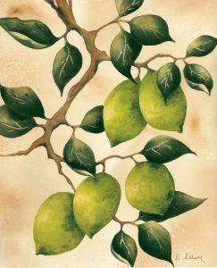 Italian Harvest – Limes
