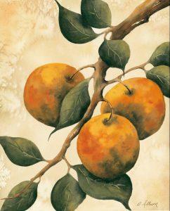 Italian Harvest – Oranges