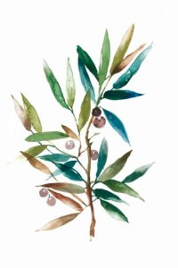 Olive Branch II