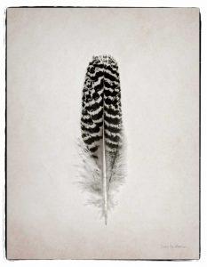 Feather I BW