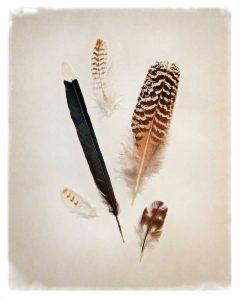 Feather Group II