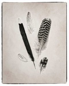 Feather Group II BW