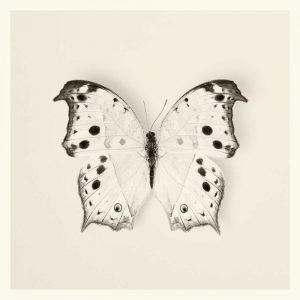 Butterfly IV BW Crop