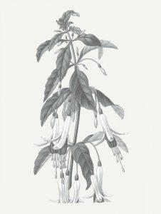 Neutral Botanical I