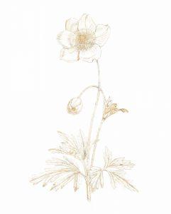 Gilded Botanical II