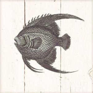 Fish Sketches IV Shiplap