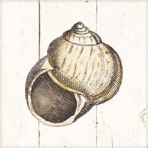 Shell Sketches II Shiplap