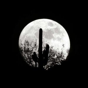 Moonrise in May II