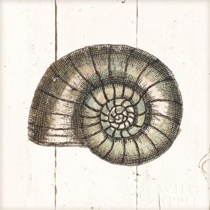 Shell Sketches I Shiplap