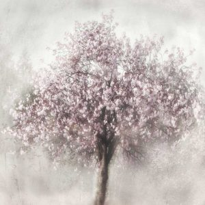Blossoms of Spring II