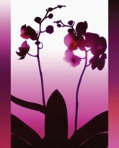Light Plum Orchid