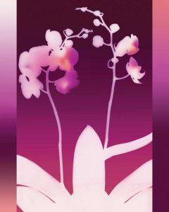 Dark Plum Orchid