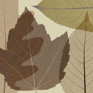 4 Leaves 2