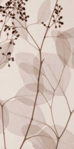 Eucalyptus III