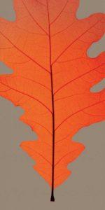 Leaves – D