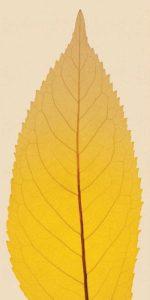 Leaves – E