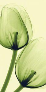 Flora – B