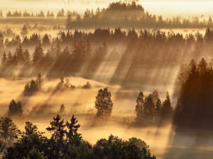 Fog impression at Sindelbachfilz, Bavaria, Germany