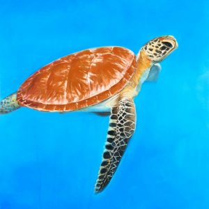 Green Aquatic Turtle