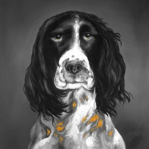 Beautiful English Springer Spaniel