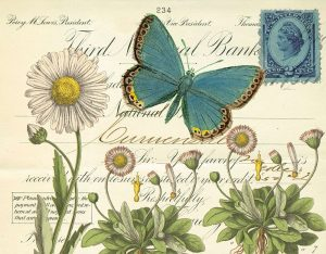 Turquoise Butterfly and Daisies