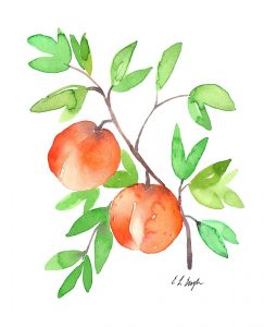 Two Watercolor Peaches