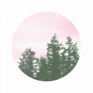 Pink Sky Over Trees
