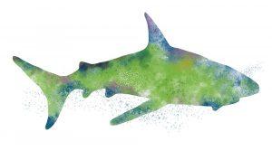 Watercolor Shark II