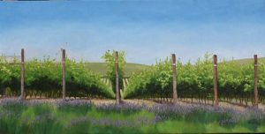 Lavender in the Vineyard