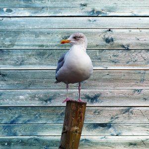 Ba Bird