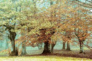 Teal Tree