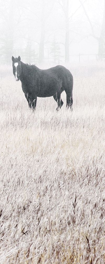 Misty Pasture I