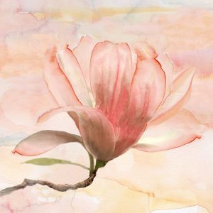 Dreamy Magnolia I