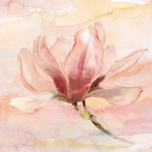 Dreamy Magnolia II