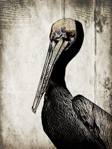 Rustic Brown Pelican