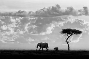 Moreno – Silhouettes of Mara
