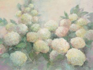 Annabelle Hydrangeas