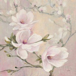 Blushing Magnolias