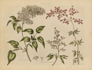 Herbal Botanical I