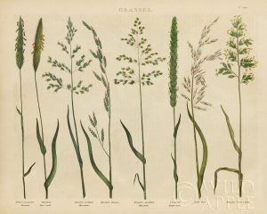 Herbal Botanical VII