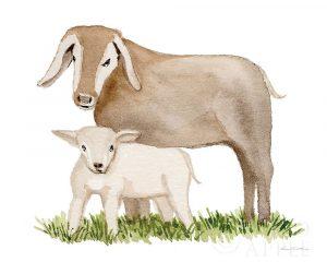 Life on the Farm Animal Element II