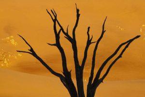 Dead tree, Dead Vlei, Sossusvlei, Namibia