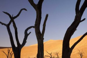 Tree and dunes, Dead Vlei, Sossusvlei, Namibia