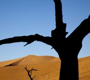Namibia, Sossusvlei Dead trees with sand dune