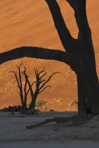 Namibia, Namib Desert Silhouette of lone tree