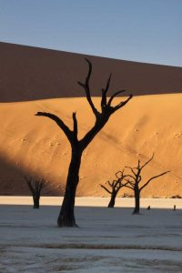 Namibia, Sossusvlei Sunrise on dead trees