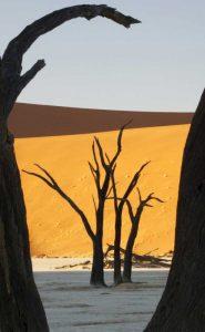 Trees and dunes, Dead Vlei, Sossusvlei, Namibia
